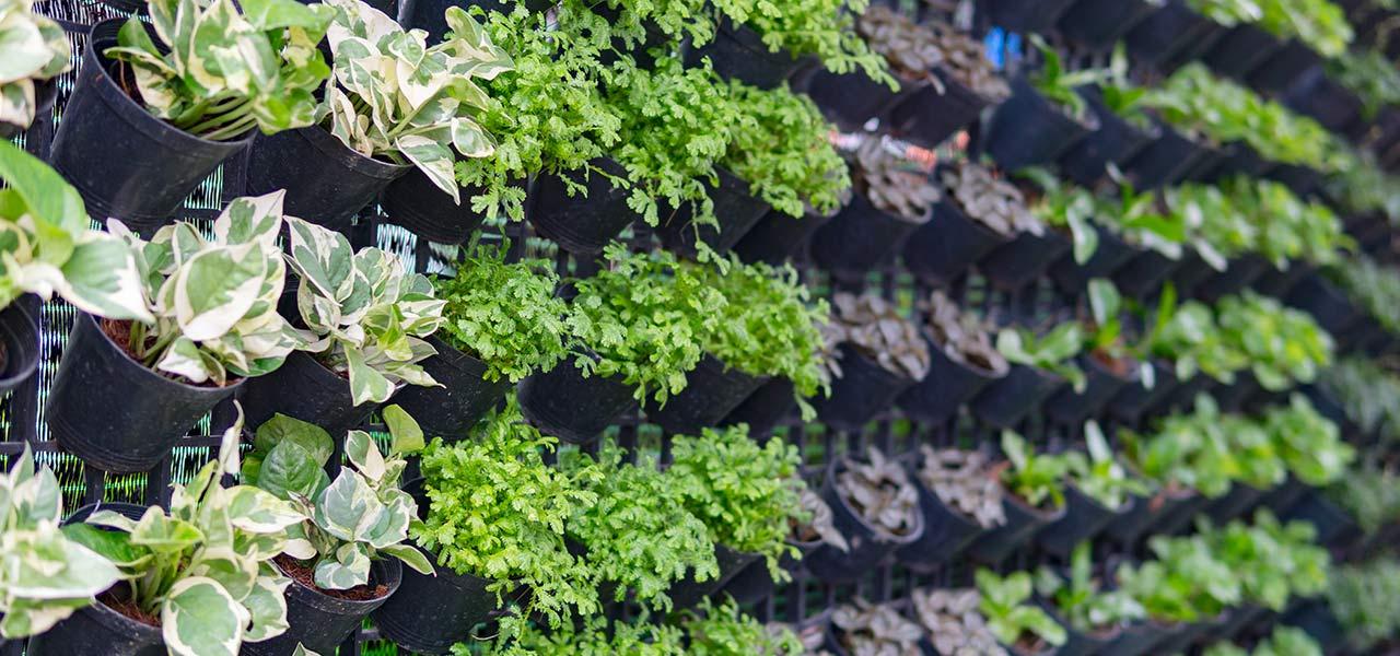 riqualificazione verde orti verticali