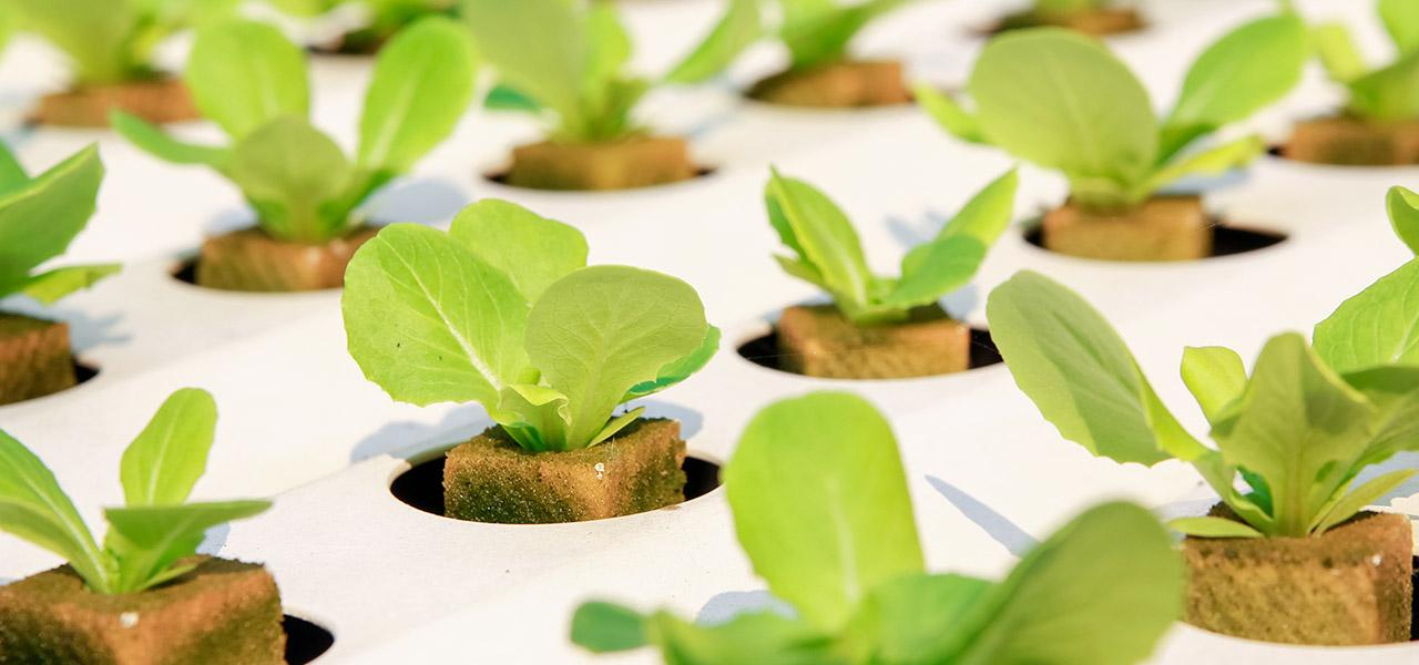 agricoltura del futuro
