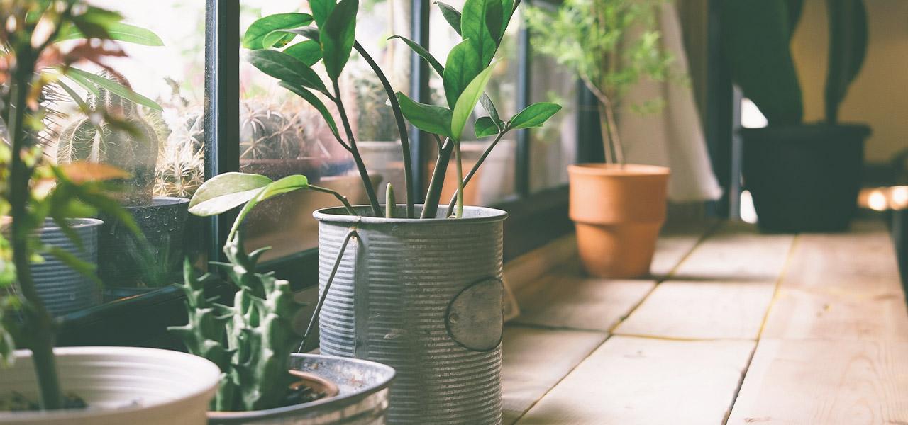 terrarium verde in casa