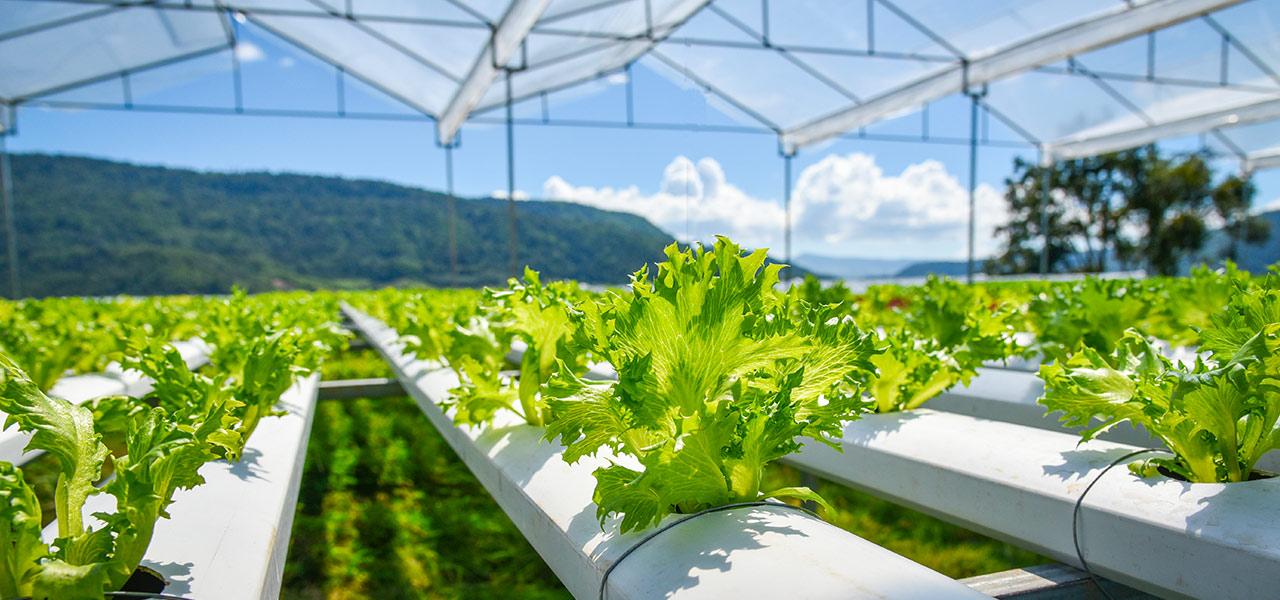 biotecnologie agricoltura