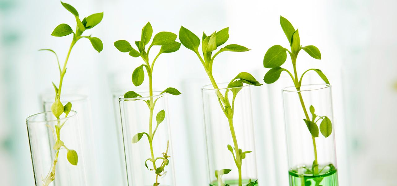 settore biotech coltivazioni